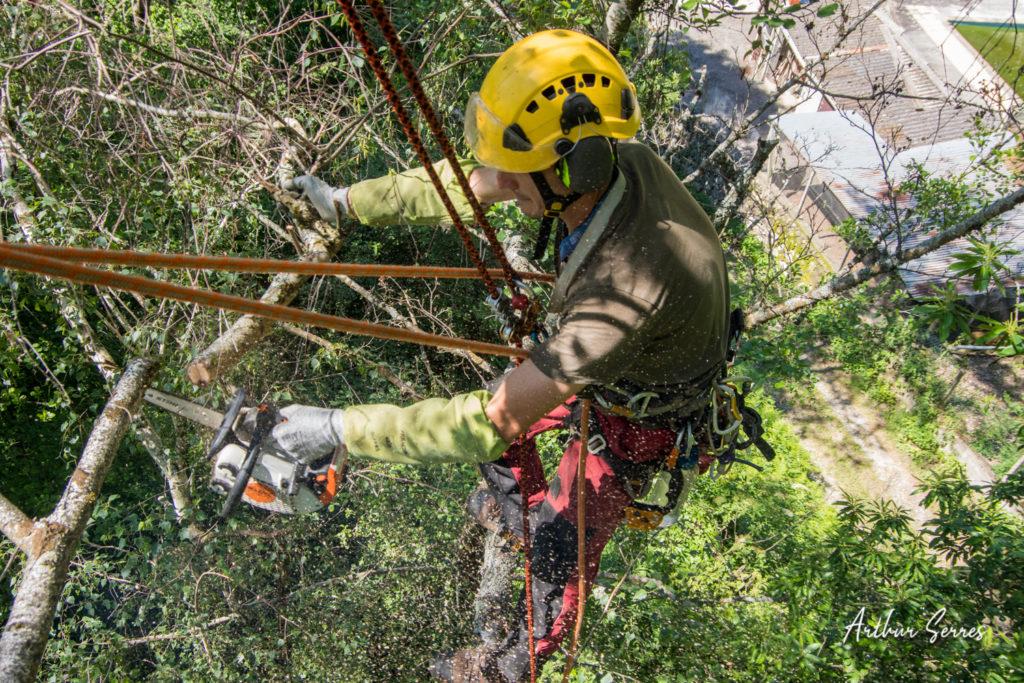 couper une branche en sécurité